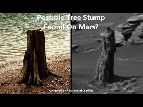 ما حقيقة جذوع الأشجار المتحجرة على المريخ؟ (فيديو)