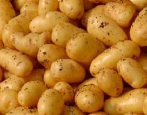 """ضبط 3 طن من البطاطا الفاسدة بـ"""" أم القطين"""""""