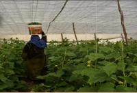 2587 امرأة حصلن على قروض زراعية