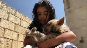 طفلة أردنية تربي الضباع