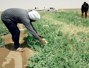 وفاة مُزارع بضربة شمس في الأغوار