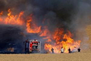 أضرار كبيرة بالأشجار اثر حريق في عجلون