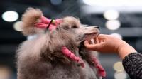 مسابقة لجمال الكلاب! (صور)