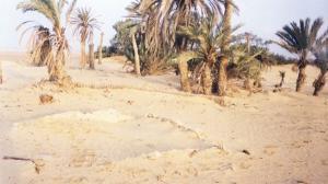 هل هذا هو المكان الذي غرق فيه فرعون وجنوده؟
