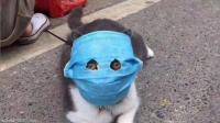 """""""القطط المقنّعة"""" تظهر في الصين (صور)"""