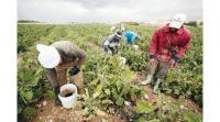 توجه حكومي لزيادة صلاحية تصريح العمل الزراعي