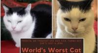 """عرض """"أسوأ قطة في العالم"""" للتبني مجاناً"""