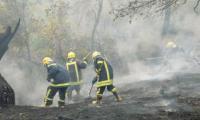 عجلون: 63 حريقا وتعديا على الغابات منذ بداية العام