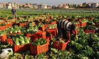 الاردن يلغي الرسوم على الصادرات الزراعية
