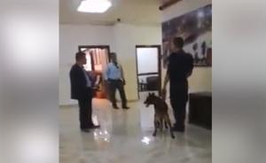 الامن: استخدام الكلاب في بلدية اربد اجتهاد خاطئ