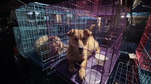 بالصور ..  تعرف على أغرب مهرجان صيني لأكل لحم الكلاب