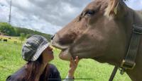 النمسا تحذر من تحدي تقبيل الأبقار -فيديو