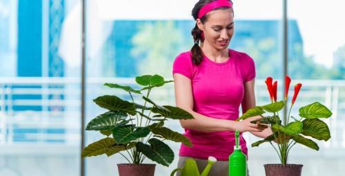 العلماء ينصحون بتواجدها في كل بيت ..  تعرفي على نباتات الحظ والنقاء