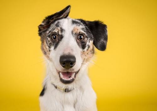 شركة تعلن عن وظيفة خاصة بـ الكلاب فقط(صورة)