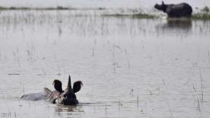 فيضانات الهند تغرق محمية شهيرة