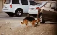 اسمى معاني الرحمة ..  الميت قط والدافن كلب ! (فيديو)