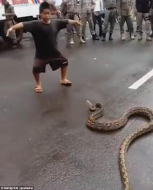 بعدما أغلقت الطريق  ..  شاهد ما فعله طفل صغير بأفعى عملاقة (فيديو)