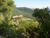 95 % نسبة الإشغال بمحمية غابات عجلون خلال العيد