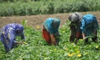 انتهاكات خطيرة تتعرض لها نساء عاملات بالزراعة