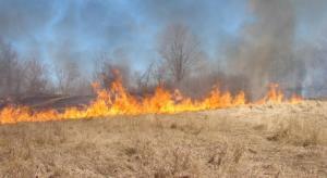 حريق يلتهم مساحات واسعة من الاعشاب في عجلون