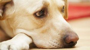 الاشتياق يقتل كلبا! (شاهد)