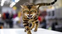 قطة تنهي حياة طفلة