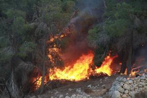 النيران تلتهم 100 دونم بعراق الأمير