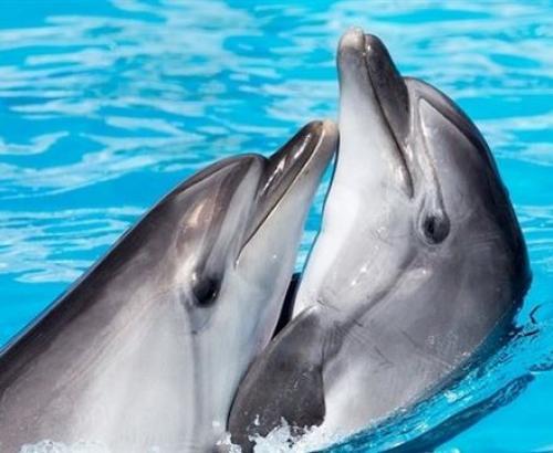 بحر من الدماء بعد مقتل 1428من الحيتان والدلافين