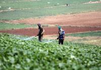 49 مليون دينار قروض للمزارعين خلال الـ 2020