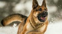 إقالة ضابط أمريكي بعد اعتدائه على أحد كلاب التدريب(فيديو)