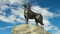نصب تذكاري تكريما لكلبة انتظرت صاحبها 12 عاما !