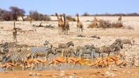 دولة تعرض 1000 حيوان بري للبيع بسبب الجفاف