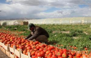 المنتجات الزراعية الاردنية تدخل الاسواق الروسية