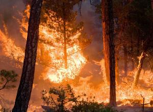 """حريق يأتي على 5 دونمات في منطقة """"راجب"""""""