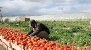 """""""النواب"""" يرفض فرض ضرائب جديدة على المزارعين"""