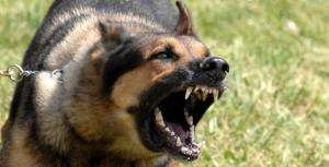 العقبة: وقف العمل بقرار اصطياد الكلاب مقابل 10 دنانير