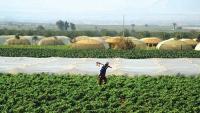 توصيات نيابية حول القطاع الزراعي