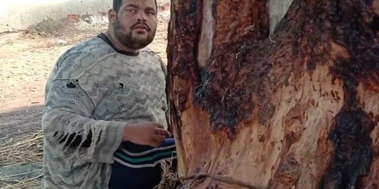 مصرية تربط ابنها في شجرة منذ 15 عاما  Image