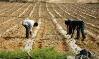 تأجيل مستحقات الاقراض على المزارعيين المتضررين