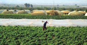 تحذيرات للمزارعين خلال المنخفض الجوي