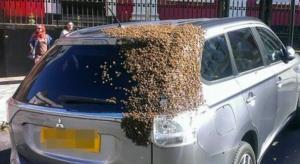20 ألف نحلة تطارد سيارة ليومين متتالين لإنقاذ الملكة!
