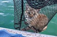 عائلة تصطاد قطا بدلا من الأسماك (صور)