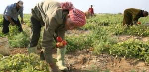 دراسات دولية: الأردن يستطيع زيادة الصادرات الزراعية لـ مليار دينار
