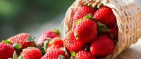 الفراولة وفوائد صحية غير متوقعه لتناولها
