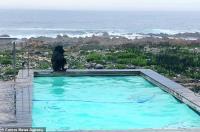 قردان يستوليان على حمام سباحة منزل (صور)
