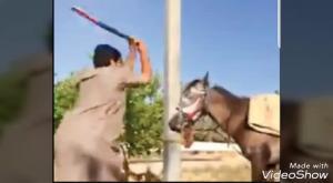 السياحة تحذر من تعذيب الحيوانات بالاردن