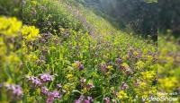 انحسار الكتلة الحارة اليوم وأجواء ربيعية