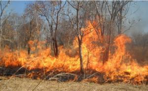 حريق يلتهم مساحات واسعة من الأعشاب الجافة باربد