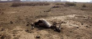 عشرات الحيوانات تموت جوعاً بسبب نقص الغذاء في فنزويلا
