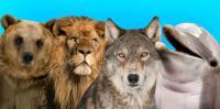 العالم سيشهد موجة انقراض ..  وهذه المخلوقات أول الضحايا